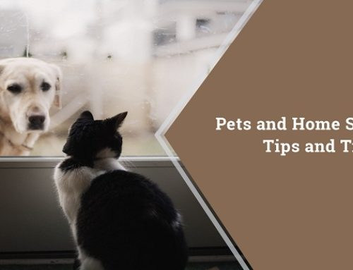 Pets and Home Sales: Tips and Tricks