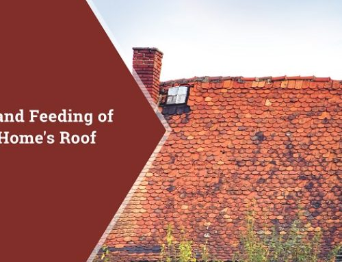 Care and Feeding of Your Home's Roof