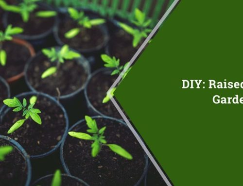 DIY: Raised Bed Gardening