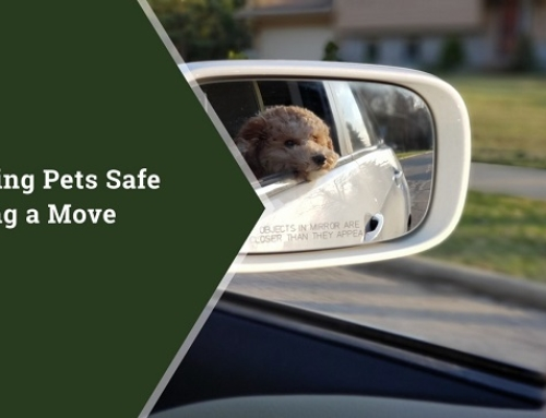 Keeping Pets Safe During a Move